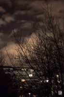Trees in the night by sylvaincollet
