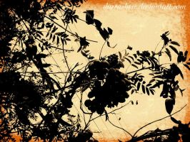 silhouette of a mountain ash by DarraChese