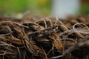 Hidden Secet by Flamix
