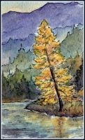 Golden Larch by tuningmyheart