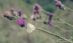 Sweet Little Butterfly by RBSpictures