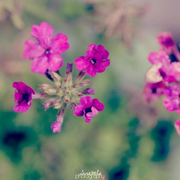small purple by juul07
