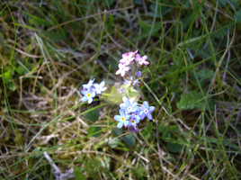 2 color little flowers by Dragoonsa