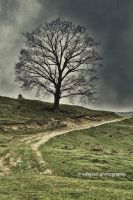 The Lone Watcher HDR by Ashgaan