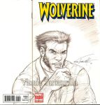 Wolvie sketch cover by VinRoc