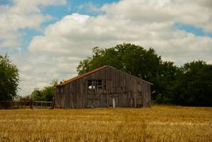 Old Barn in Gold Field with Blue Sky by CatherineCross