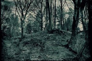 Obscure forest by wojtar