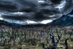 Torres Del Paine - Chile - Tree Fields - HDR by ssabbath
