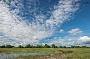 Chobe CrocScape by MorkelErasmus