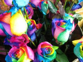 Roses in Technicolor 3 by J-M-P-16