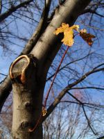 Disbeleaf by MStout