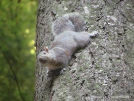 Looking Up a Tree Trunk at a Squirrel by vanwaglajam