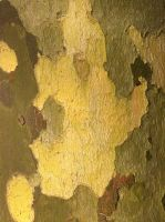 Bark Texture 3 by Siobhan68
