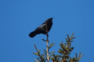 Crow Keeping an eye on me, and me with one on him by tdogg115