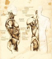 anatomy 4 by DariaGALLERY