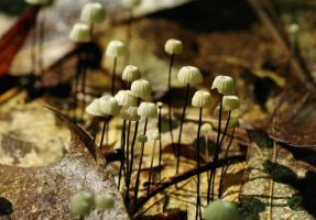 Tiny mushrooms by barcon53