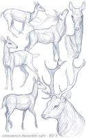 Study: Deer by CobraVenom