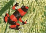 Day 21: Lehmann's Poison Frog by whitetippedwaves