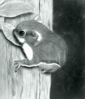 Sugar Glider by Thorane