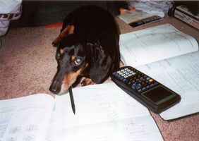 Norman - AP Calculus Dog by thetangyzip
