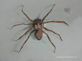 Just a Spider. - Ballpoint Pens by MariaSketch