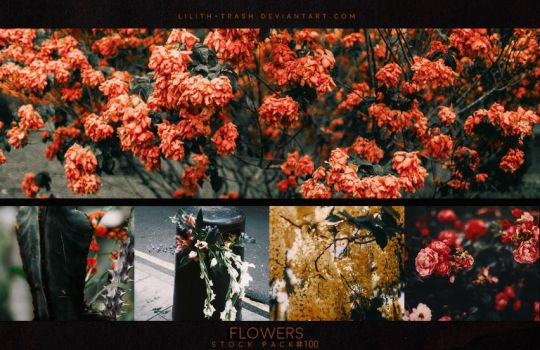 Flowers ( Stock Pack ) by Lilith-Trash