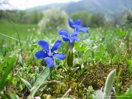 Forest meadow spring by love1008