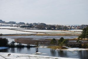 Icy Island Horsee by mr-macd