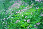 Field of Flowers by annaluiza993