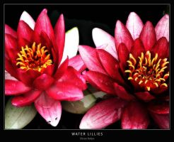 Water Lillies by Missionpb
