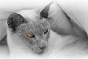 Delilah monochrome by SWAT-Strachan