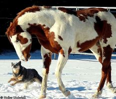 Of horses and cattle dogs. by ThunderhillPaints
