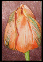 Tulip ACEO by unSpookyLaughter