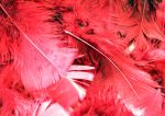 feather stock - red by rockgem
