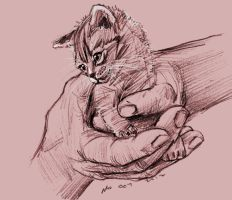 mandatory daily cat sketch 1433 by nosoart