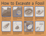 How to Excavate a Fossil by DrummerGirl375