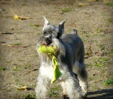 A toy in mouth by clotus