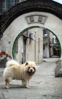 Dog in Hangzhou by thevictor2225