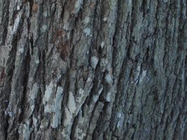 bark texture2 by akinna-stock