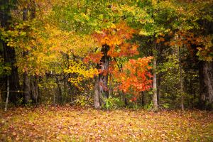 colorful fall leaves stock by venomxbaby