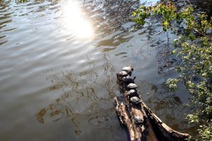 Turtles by cynstock
