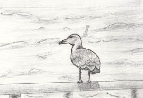 Seagull Drawing by Eben-swf
