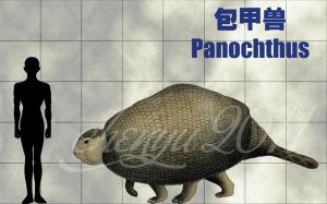 Panochthus by sinammonite