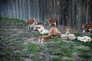 Cat takeover by AntlerCreek