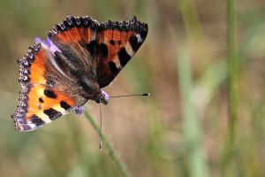 Symetric Butterfly by FlorianHebel