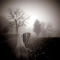 CCXXXIX. ..in the fog V. by behherit