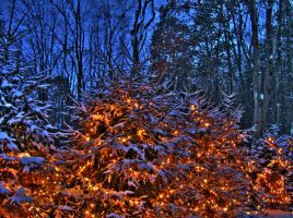 Lights and Snow by kmascilak