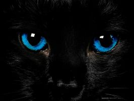 Black Cat with Blue Eyes by Cometsong