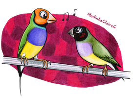 Gouldians by MadinkaClaireC