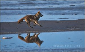 Running Reflected by tourofnature